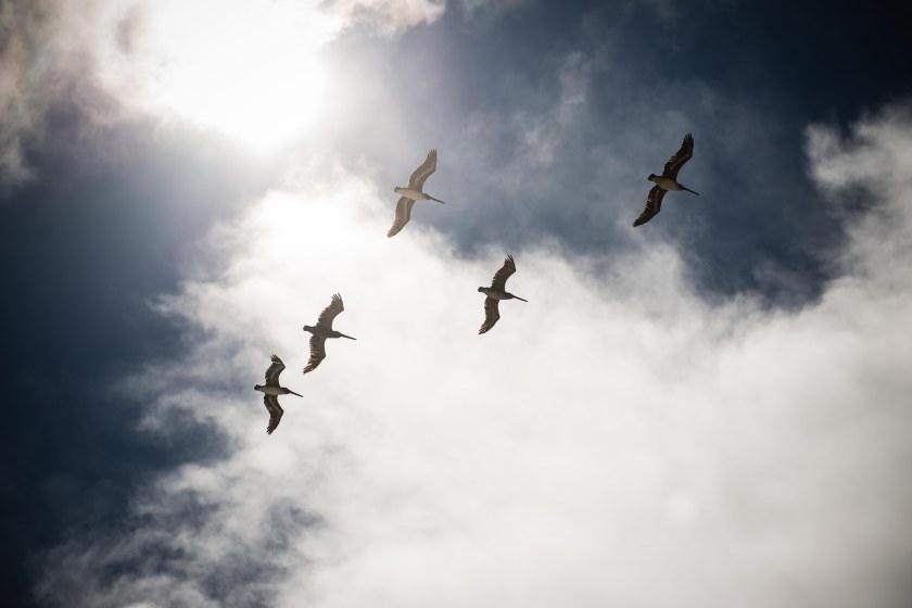 Lots of birds overhead.