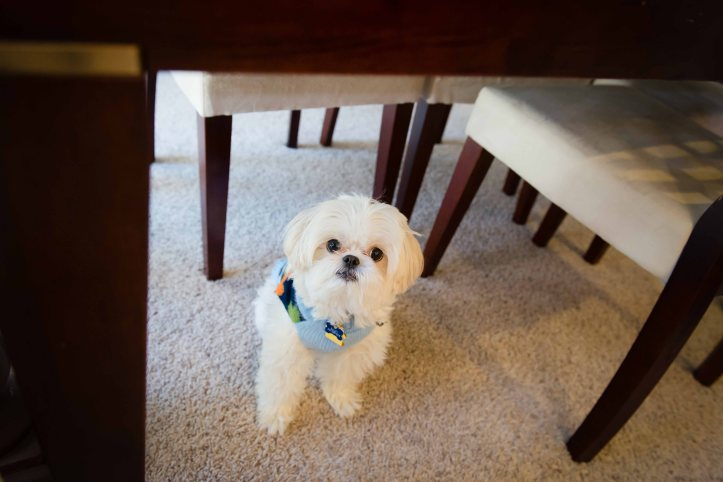 Bye, Bailey! Sometimes he hides under the table when there is too much going on. :)