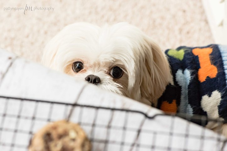 Plus my very own little cookie monster! But no cookies for Bailey. Poor Bailey. Such a hard life.