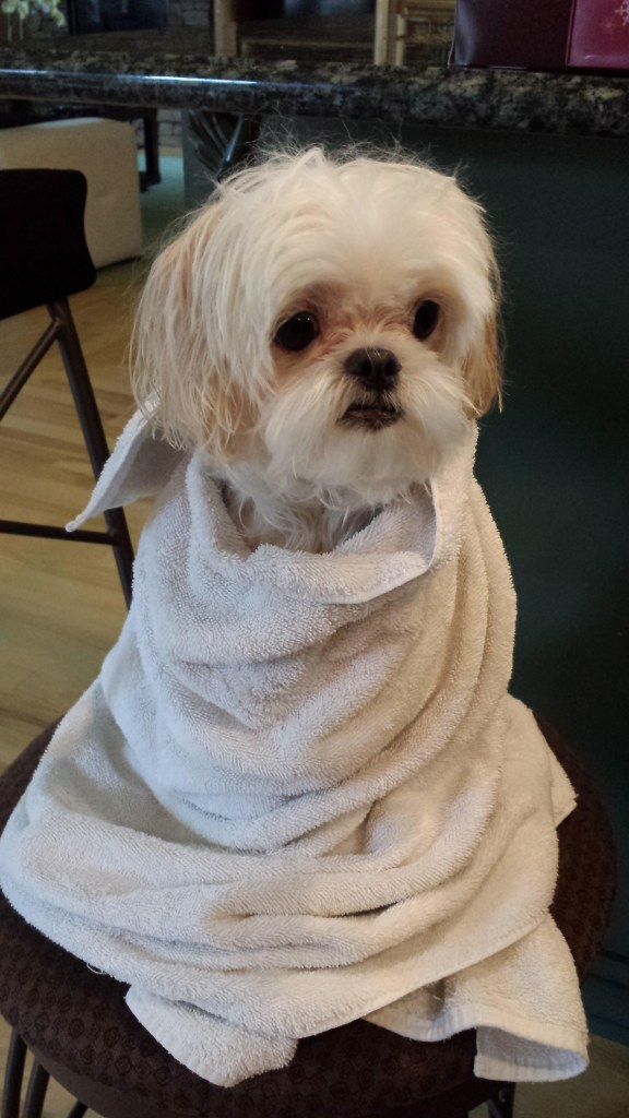 Cell phone pic after yet another bath. This one with warm water at least. And half a bottle of doggie shampoo.