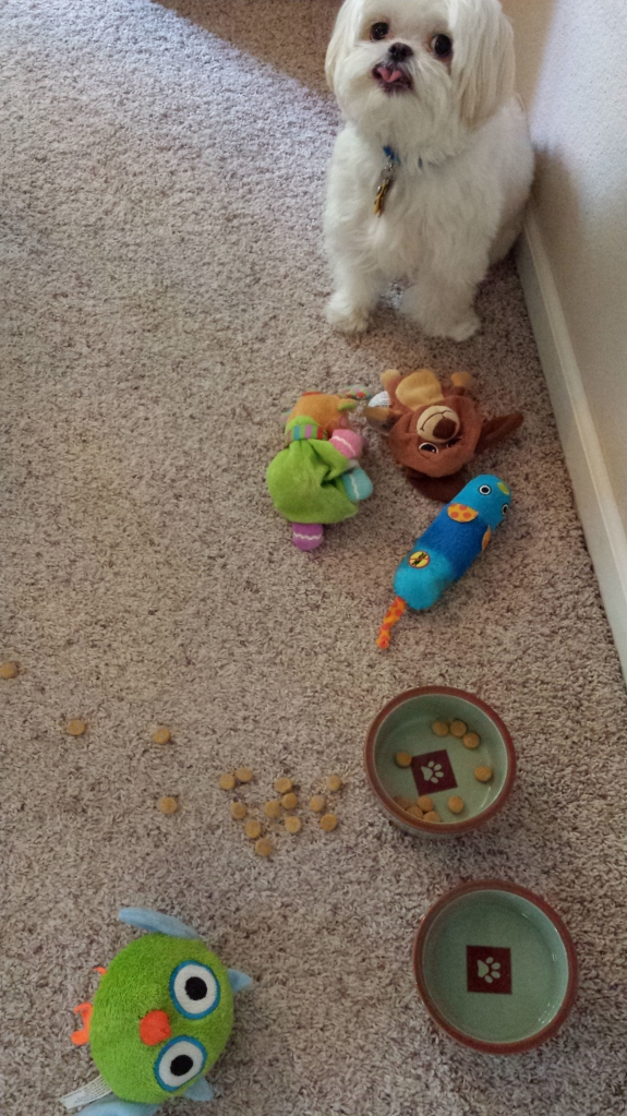 Bailey also has to have his toys nearby during meals. He won't eat without them.