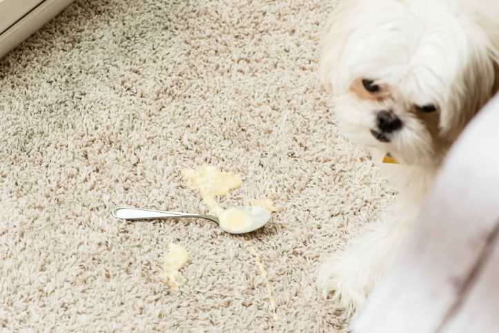 Mmm...glaze...all over the carpet. Can't even blame Bailey. I had butterfingers and dropped the entire bowl of icing upside down on the ground. Argh.